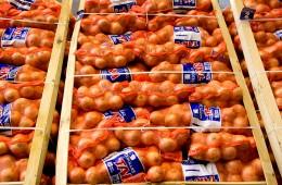 Unsere Gemüse